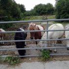 Bild mit Pferden des Frauenwies-Heimat für die Tiere e.V.