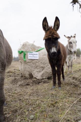 Esel steht neben Schild mit PSD Bank München eG beim PSD Eichenwald Findling