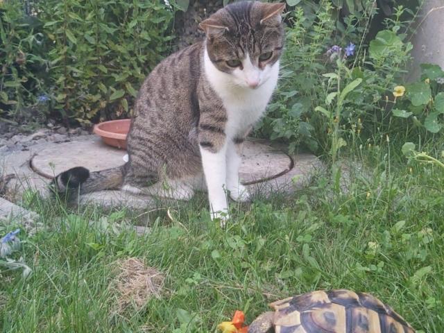 Tierschutzverein Eichstätt e. V. (6)